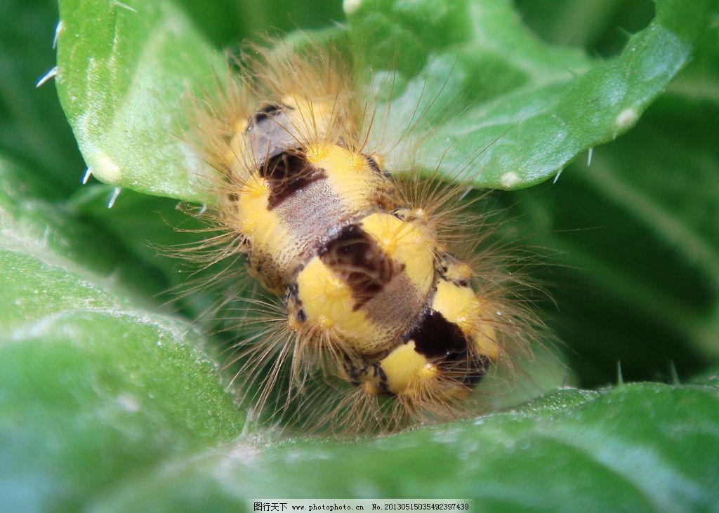 虫背 毛虫 隐形假象 绿叶 自然界 动物传奇 昆虫 生物世界 摄影