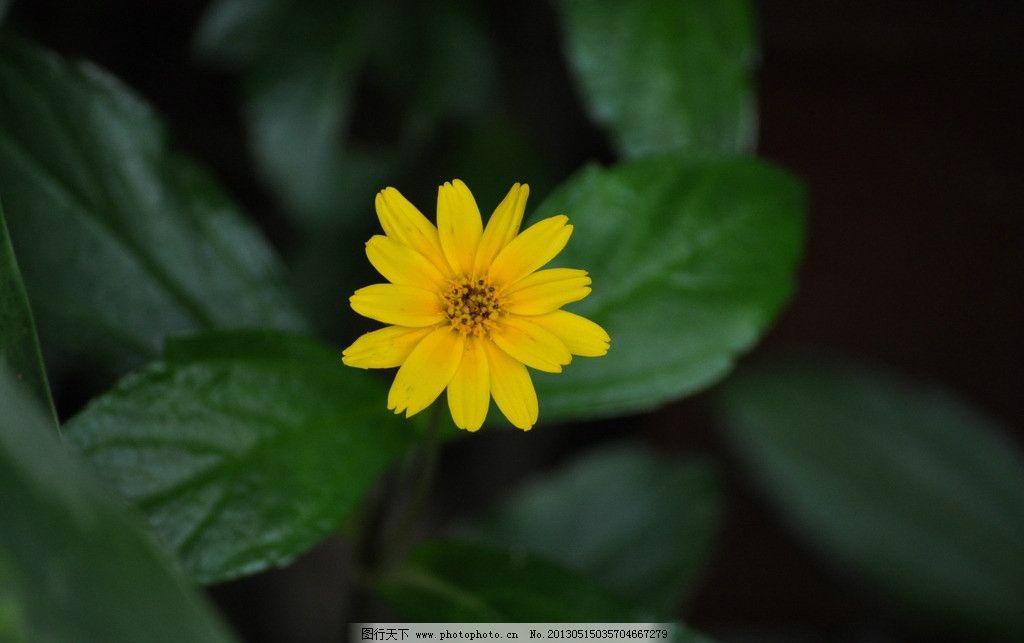 黄色植物图片
