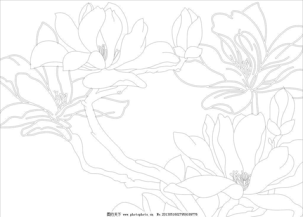 玉兰花图片