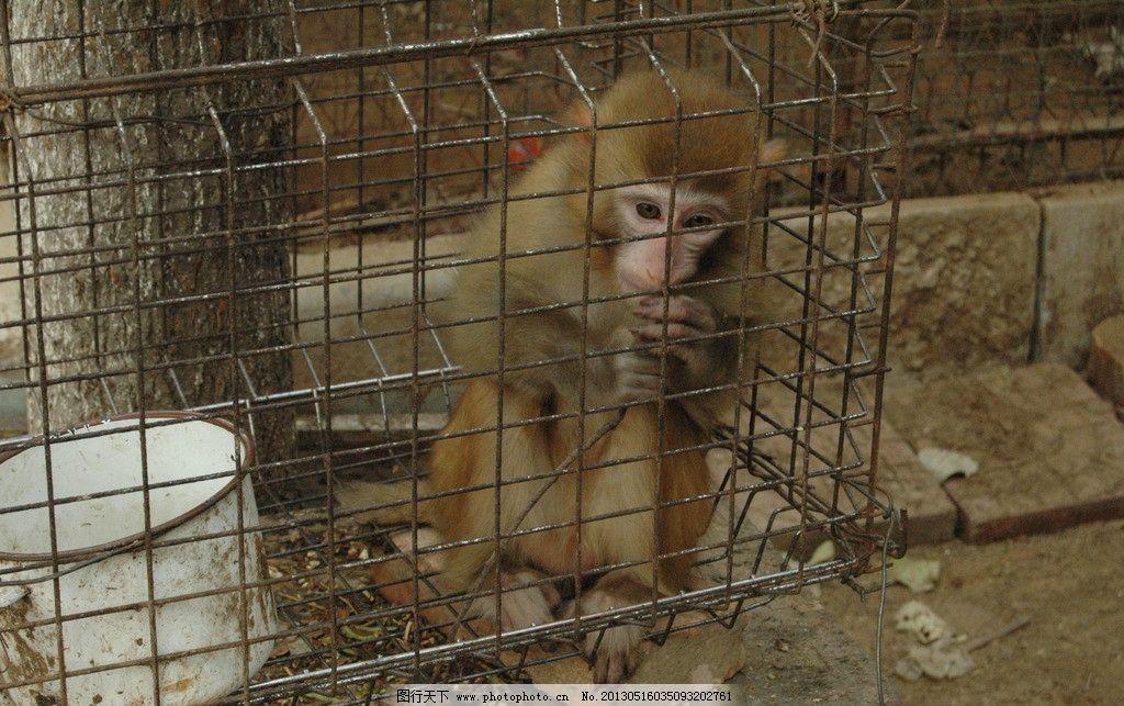 猴笼 猴子 小猴子 猴笼子 茶缸 白茶缸 可怜的猴子 动物保护 野生动物