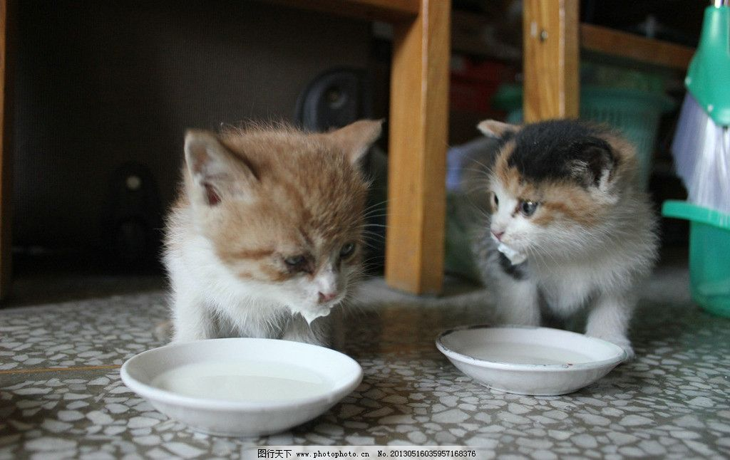 小猫 猫 小猫咪 花猫 黄猫 小猫喝奶 喵星人 宠物 小花猫 动物 伙伴