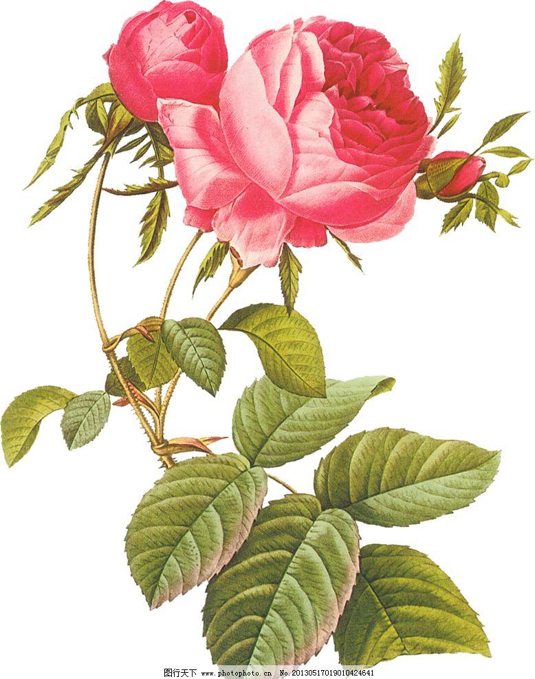 圆珠笔画,蓝玫瑰 青岛书法绘画图片