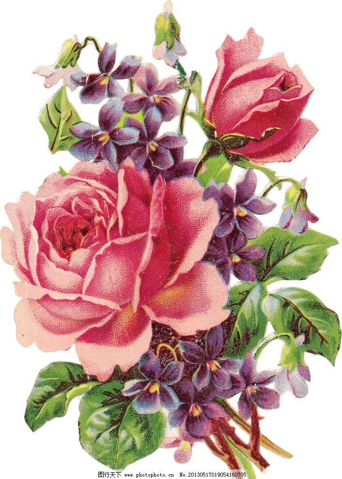 粉色玫瑰花图片_绘画书法_文化艺术_图行天下图库