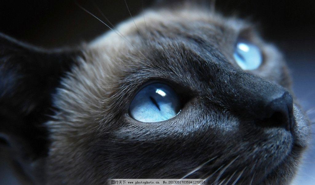 猫 黑猫 蓝眼睛猫 喵星人 家禽家畜 生物世界 摄影 72dpi jpg
