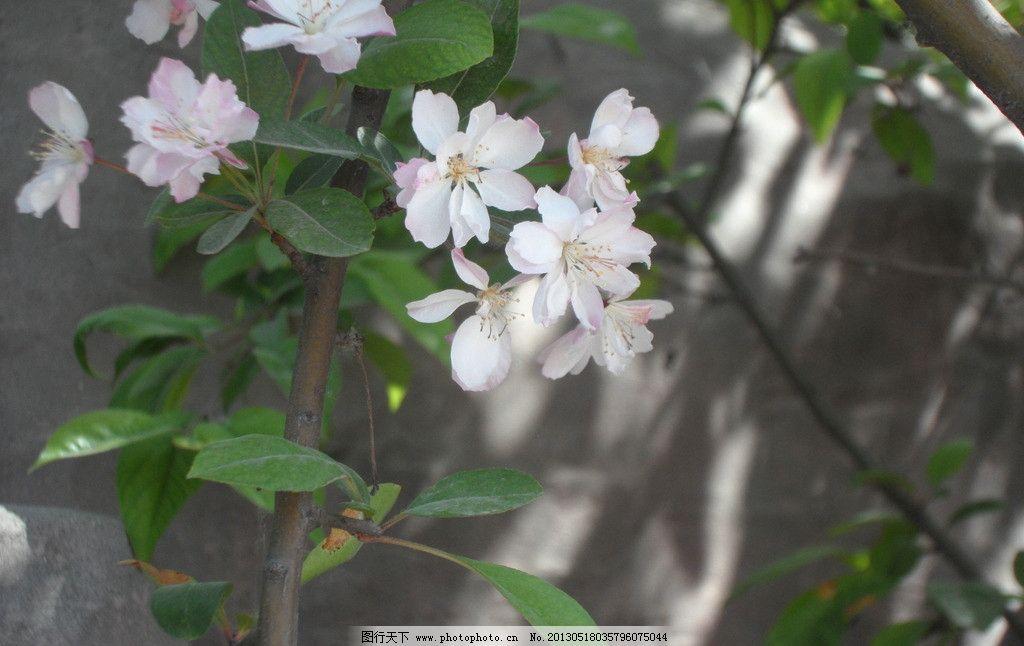 桃花 春天桃花 桃花盛开 美丽的桃花 鲜花 花草 生物世界 摄影