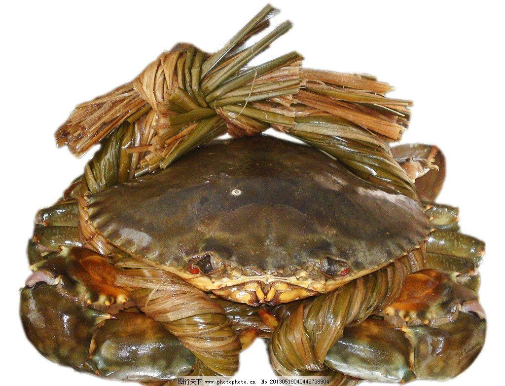 螃蟹 海蟹 鲜美 新鲜 食材 海产品 海洋生物 节肢动物 摄影