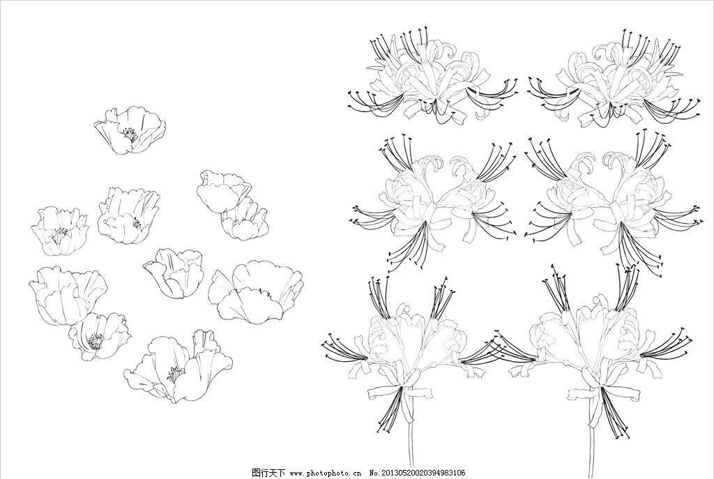 彼岸花 罂粟花图片