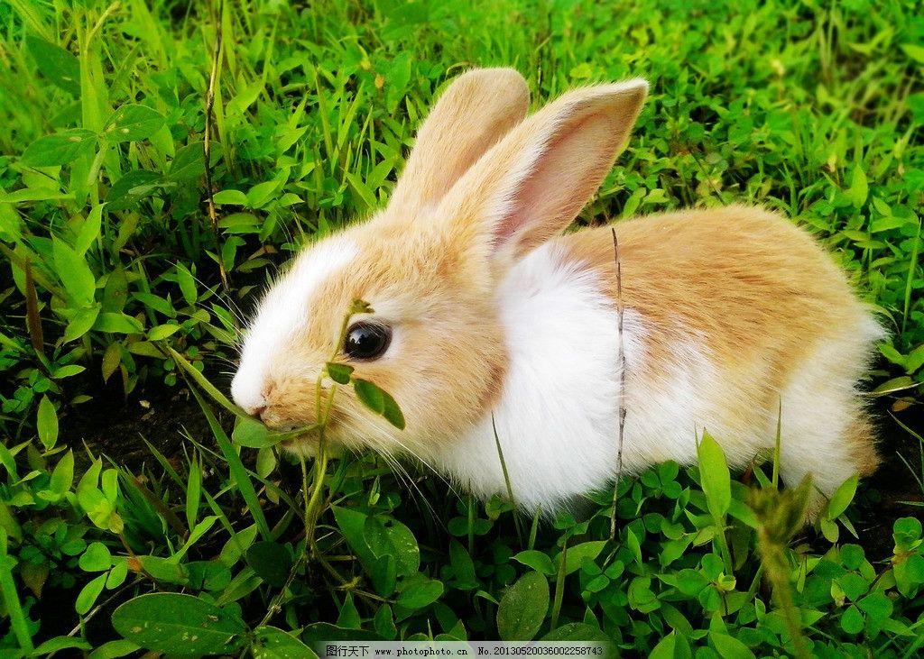 壁纸 动物 兔子 1024_731