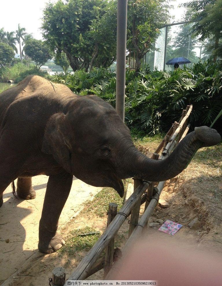 大象 动物 动物园 森林 非洲象 野生动物 生物世界 摄影 72dpi jpg