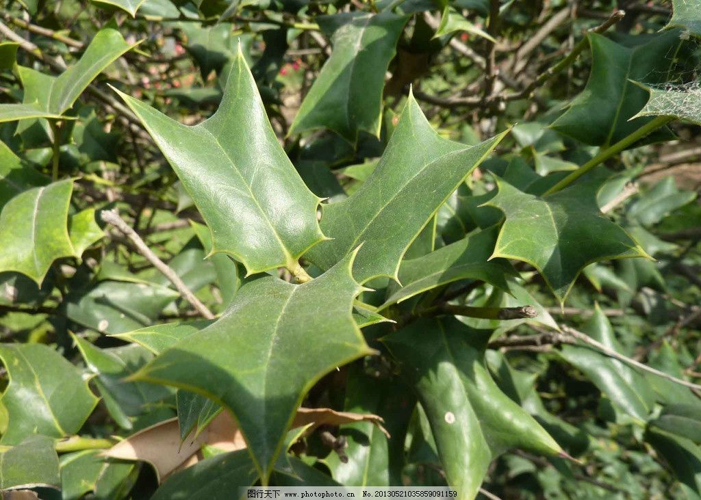 树叶 自然风景 自然景观 绿色的 植物 树木树叶 生物世界 摄影 72dpi
