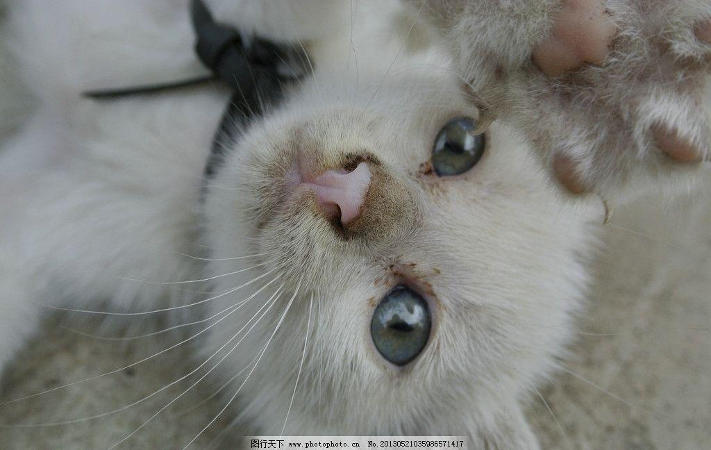 萌猫 猫咪 白色 可爱的动物 屏保 可爱的小猫 白色的小猫 玩耍的猫 萌