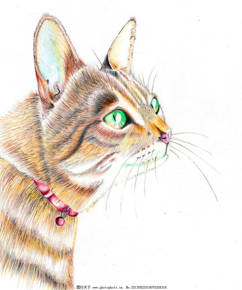 儿童绘画动物图片大全小猫