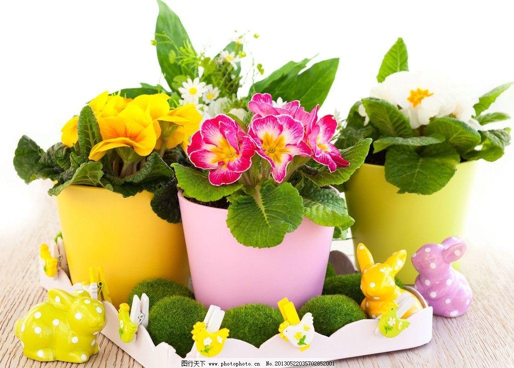 鲜花 花朵 鲜艳 漂亮 花盆 花草 兔子 可爱 温馨 浪漫 生物世界 摄影