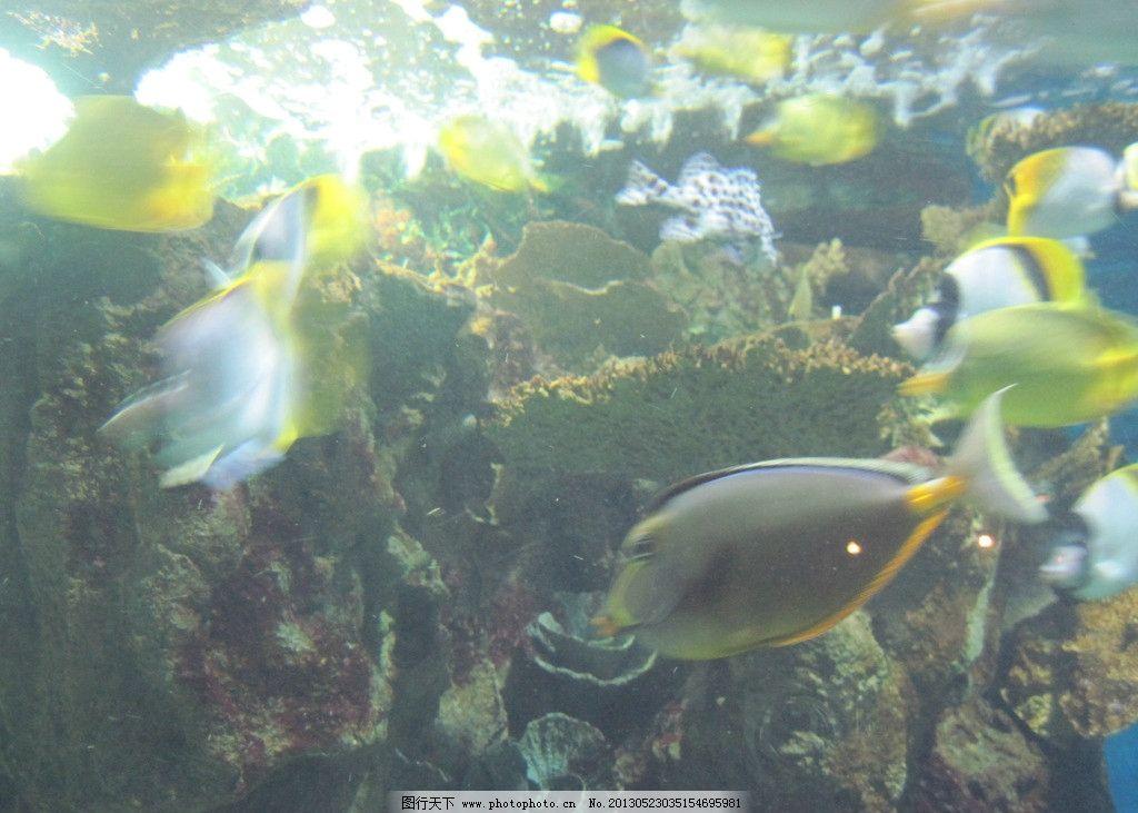 海产 海鱼 海洋动物 动物世界 深海鱼 奇异动物 珊瑚 海底世界 海底动