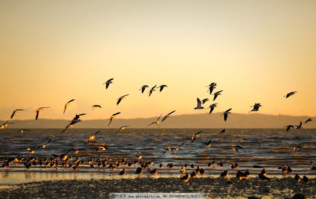 迁徙的鸟 飞鸟 鸟儿 飞翔 大海 海洋 黄昏 美景 海鸥 大雁 候鸟 鸟类