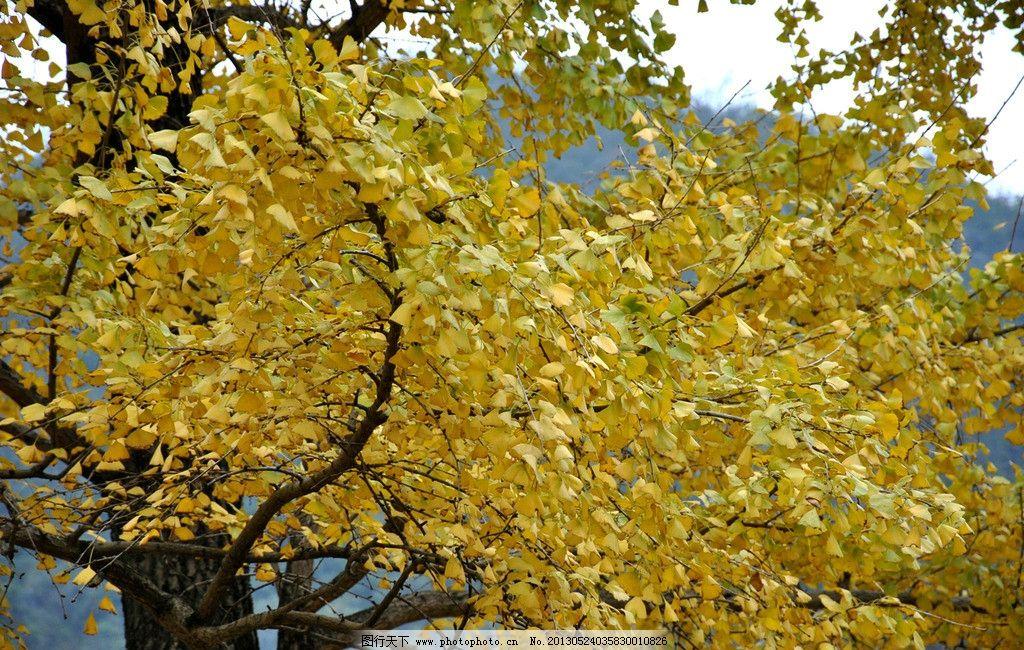 树枝 树木树叶