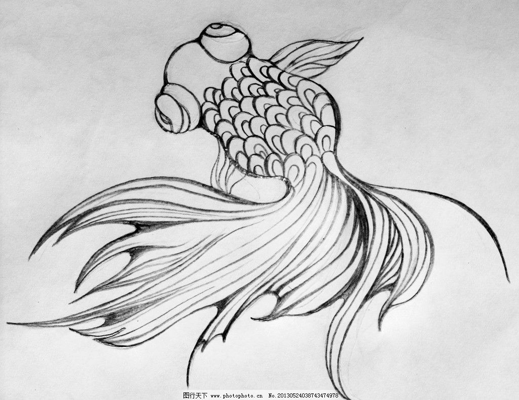 手绘金鱼 手绘 金鱼 铅笔绘制 素描 插画 纹身 美术绘画 文化艺术