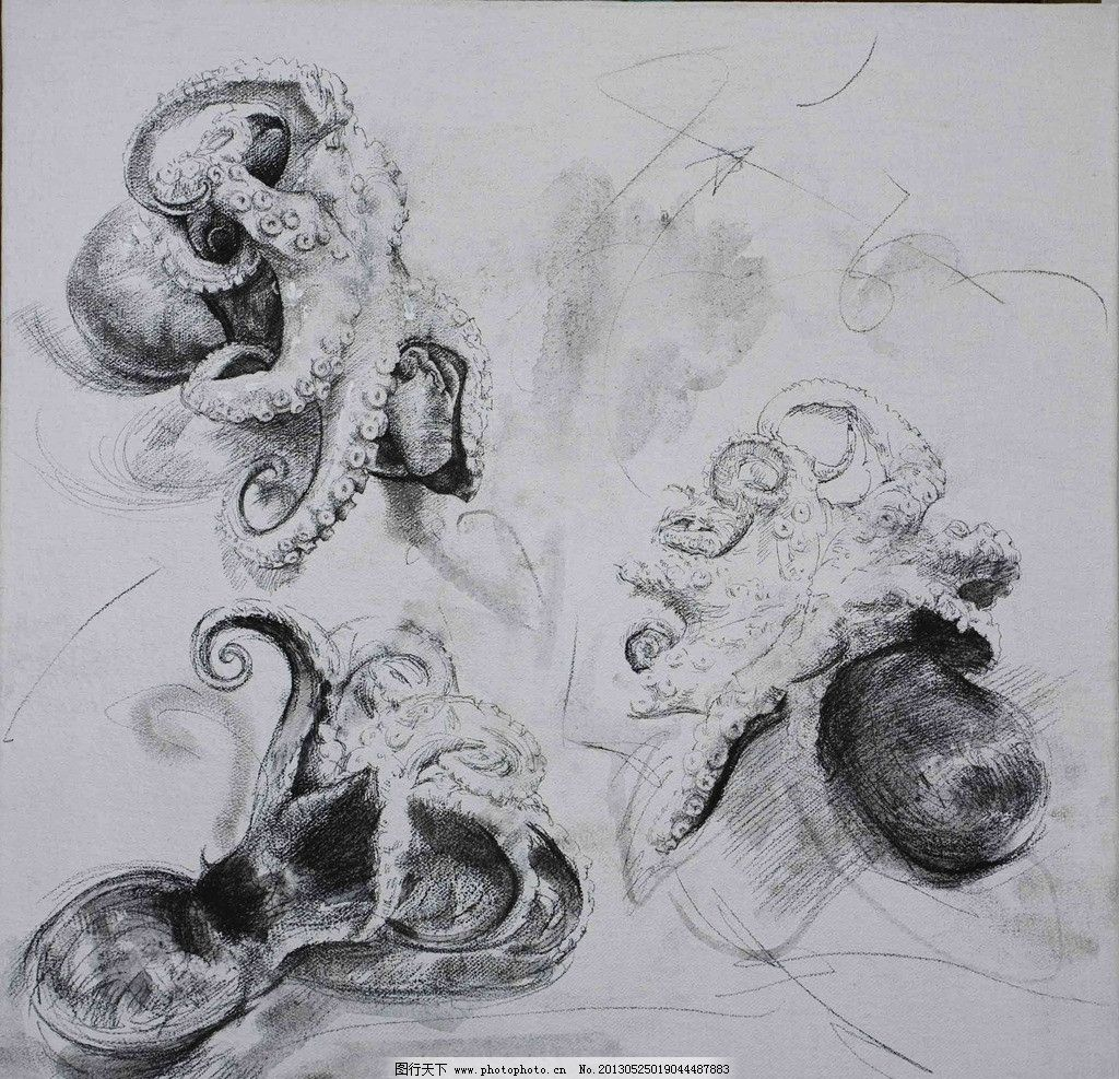 素描章鱼 素描 动物 设计 美术 艺术 绘画书法 文化艺术 72dpi jpg
