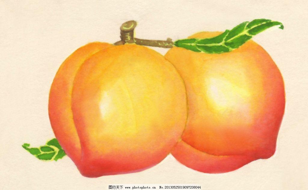 杏梅 水果 手绘 水彩画 绘画 绘画书法 文化艺术 设计 300dpi jpg
