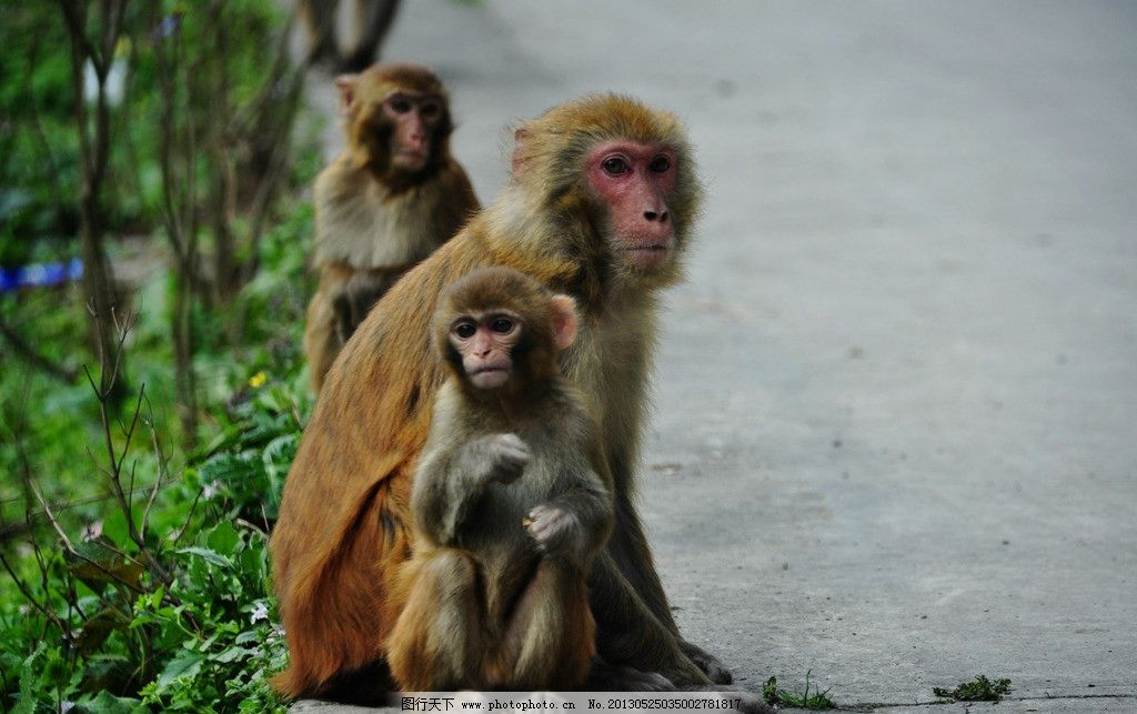 大板水的猴子 遵义 原始森林 动物纪实 野生动物 生物世界 摄影