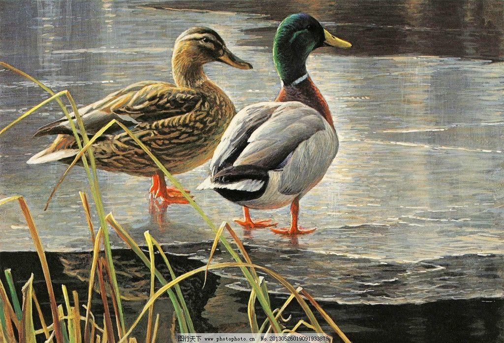 野溪鸭子 美术 油画 风景画 动物画 水鸭 溪水 水草 油画艺术 油画
