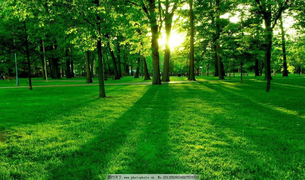 绿地树林风景 花草 树木 草地 阳光 蓝天 自然风景 自然景观图片