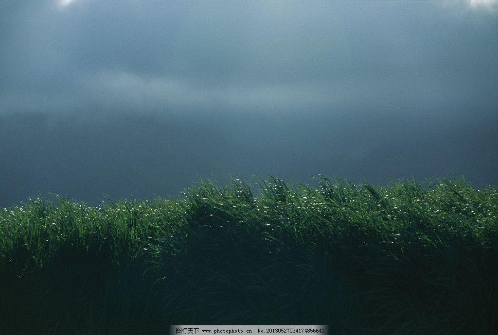 晨景 花草 红花 风景 自然风景 摄影 写真 雪景 旅游摄影图片