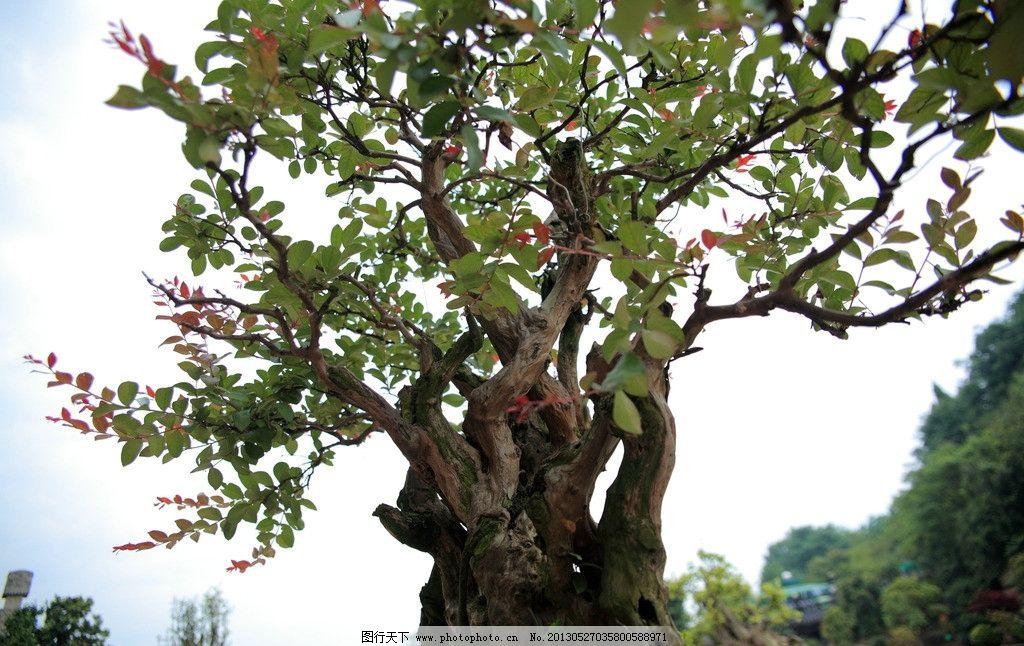 园艺树根 园艺 树根 枯根 盆景 树木树叶 生物世界 摄影 350dpi jpg