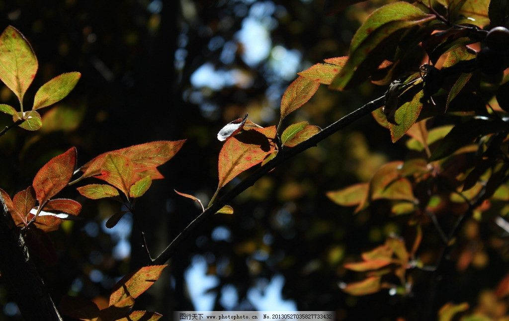 阳光下的叶子图片