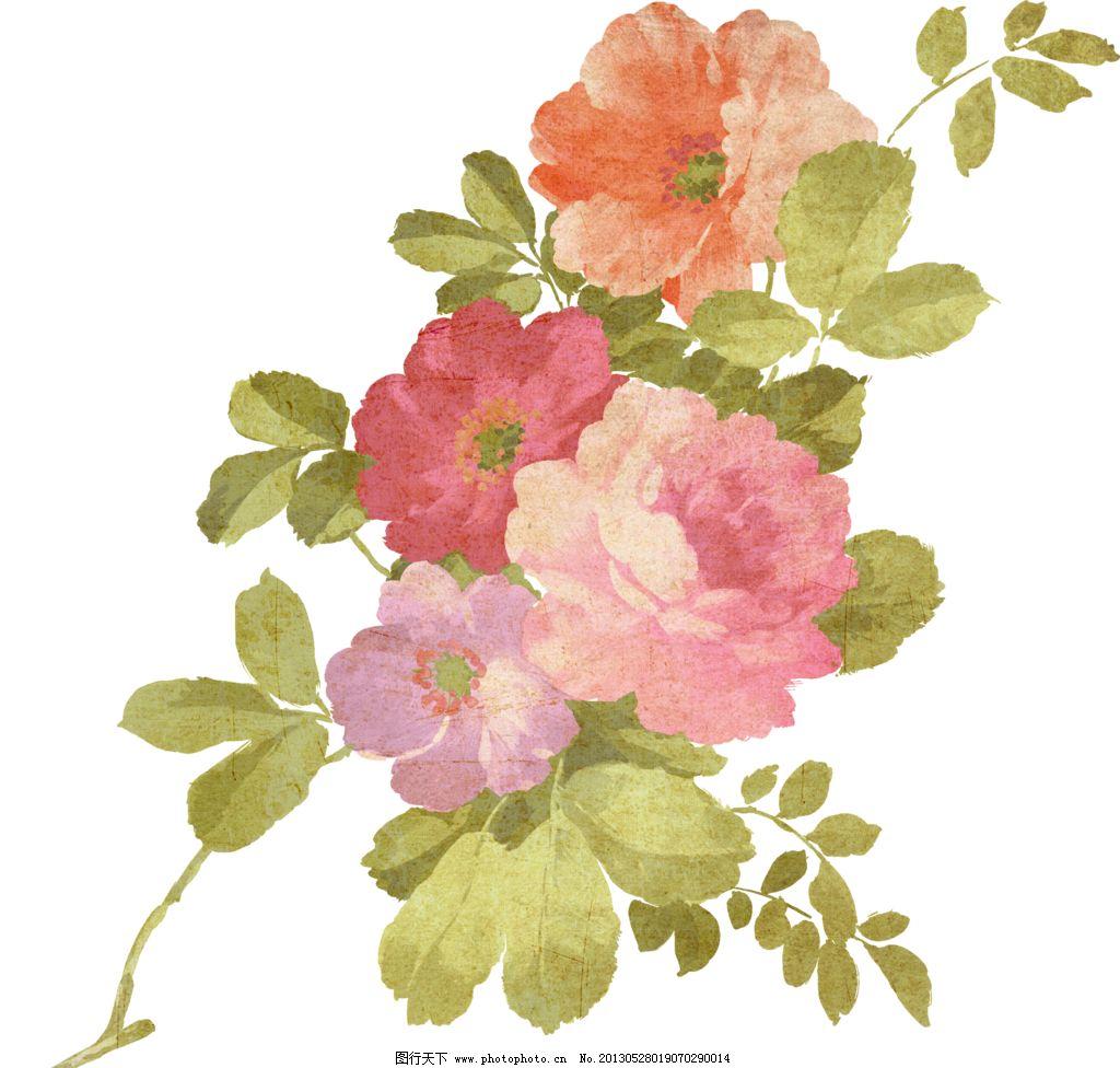 复古花朵模板下载 手绘花朵 手绘植物 复古植物 静物花卉 绘画花朵