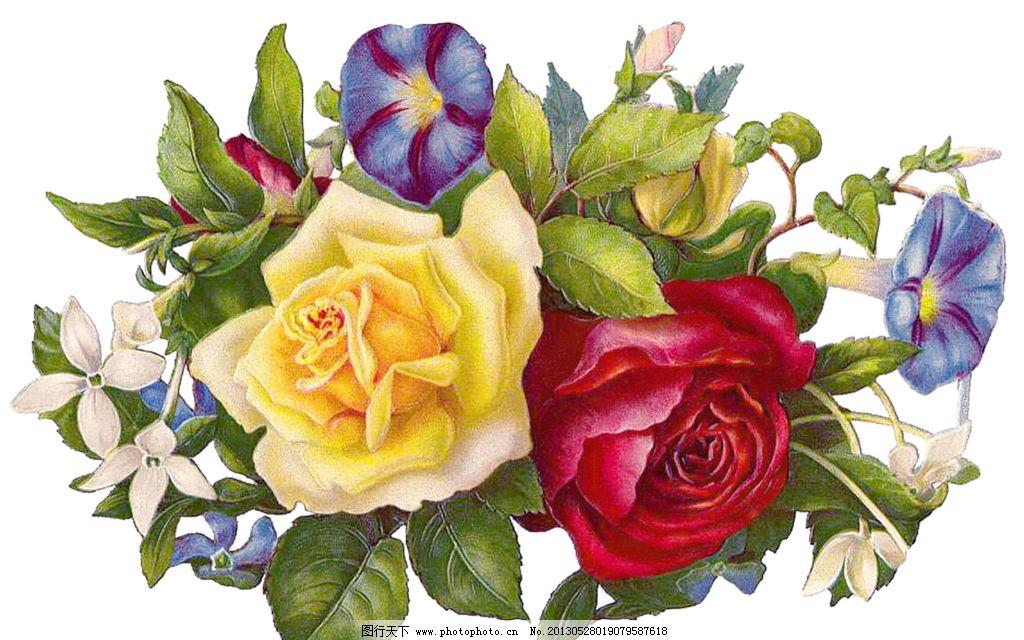 粉色玫瑰花图片_绘画书法