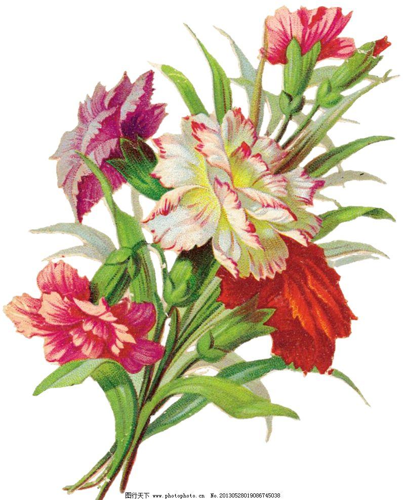 复古花卉设计素材 复古花卉模板下载 复古花卉 手绘花朵 手绘植物