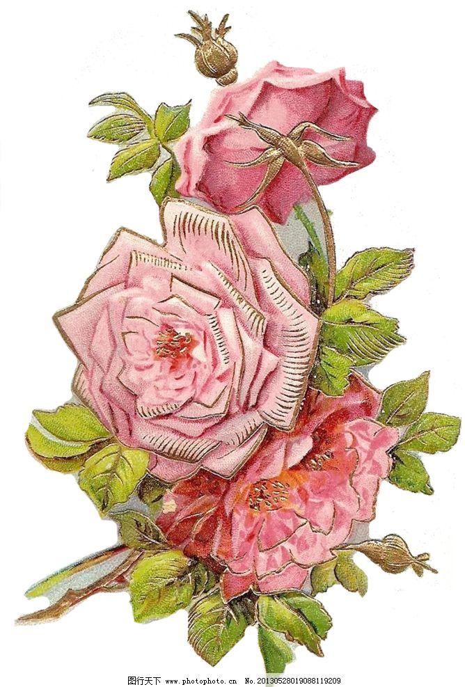 复古玫瑰花图片_绘画书法