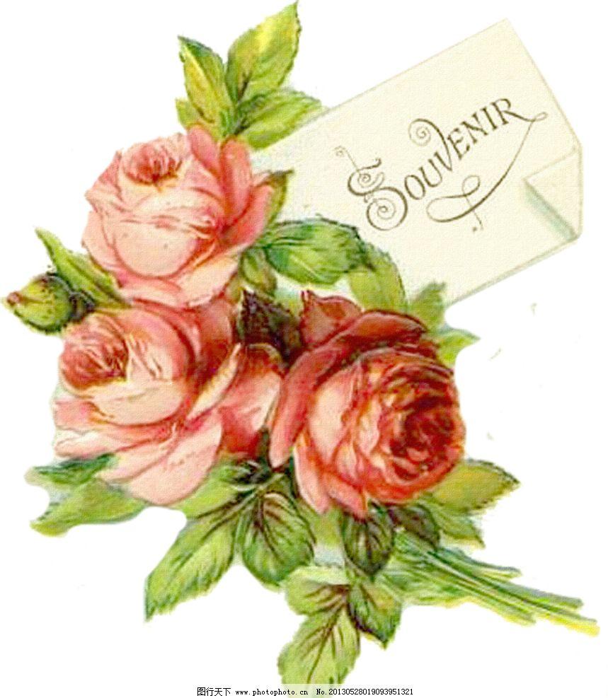 玫瑰花手绘图简单展示