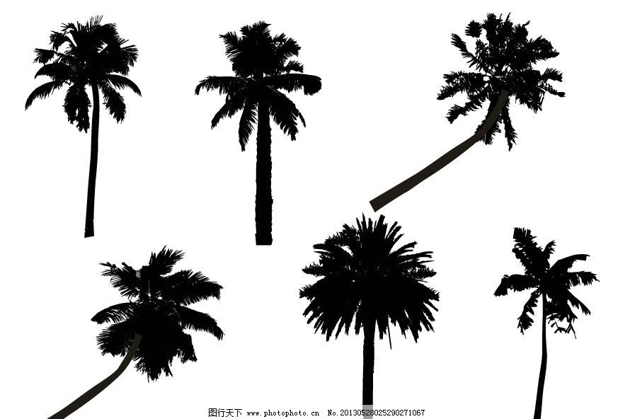 椰子树图片