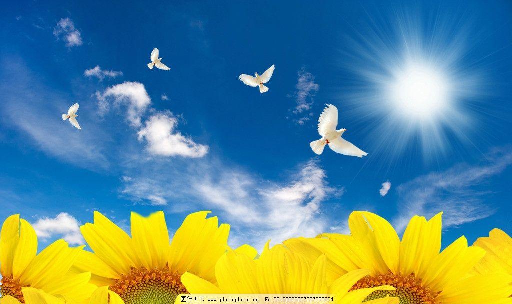 花朵天空 蓝天 白云 白鸽 向日葵 黄色 风景 花草 生物世界