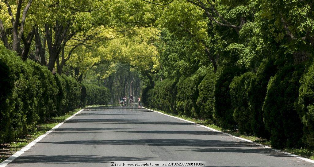 崇明岛 上海 国内旅游 旅游摄影 摄影 乡村公路 树林 公路 国道 省道