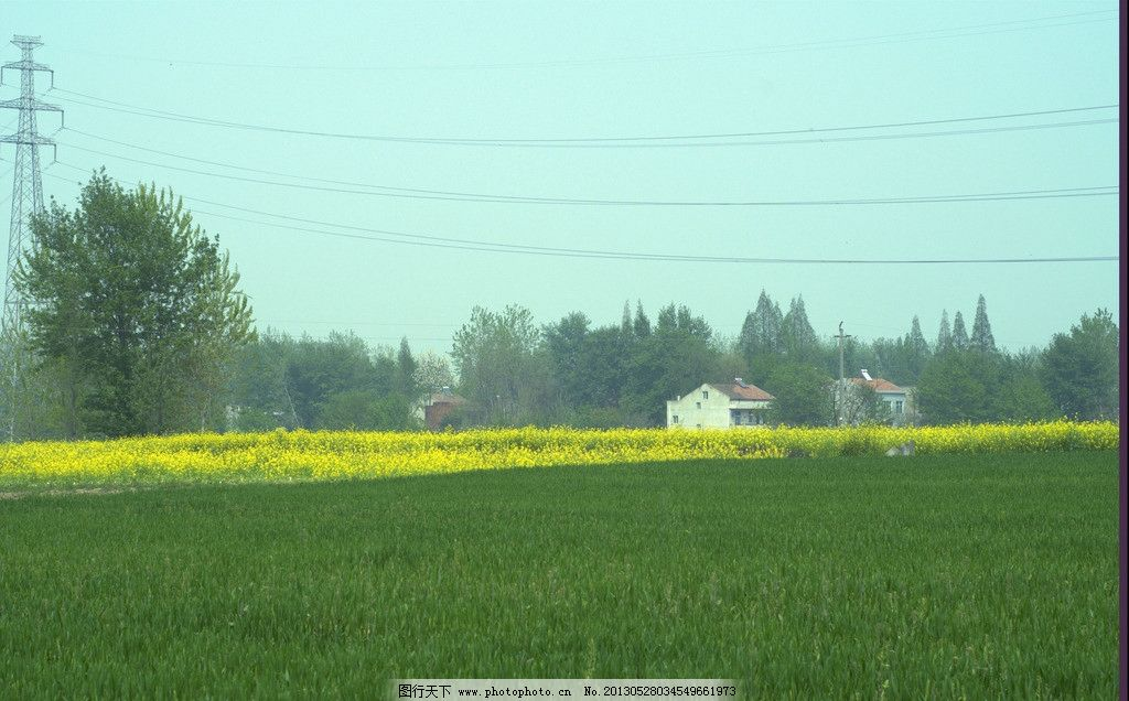 乡村麦田图片