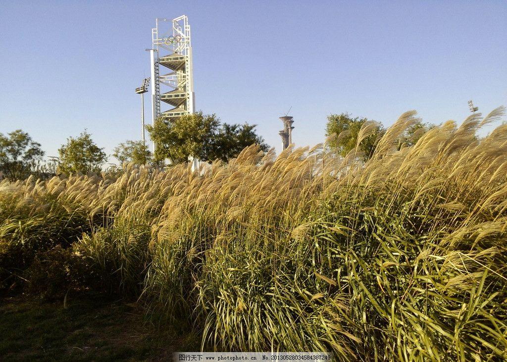 芦苇 鸟巢 唯美 夕阳 塔 田园风光 自然景观 摄影 72dpi jpg