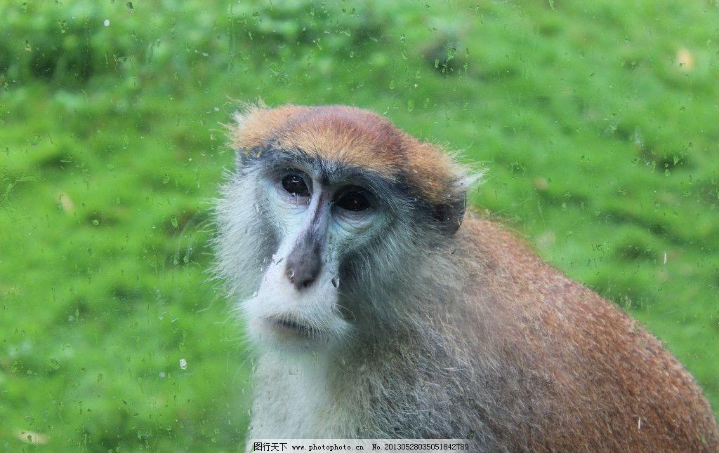 猴子 东莞香市动物园 动物园 老猴子 香市动物园 野生动物 生物世界