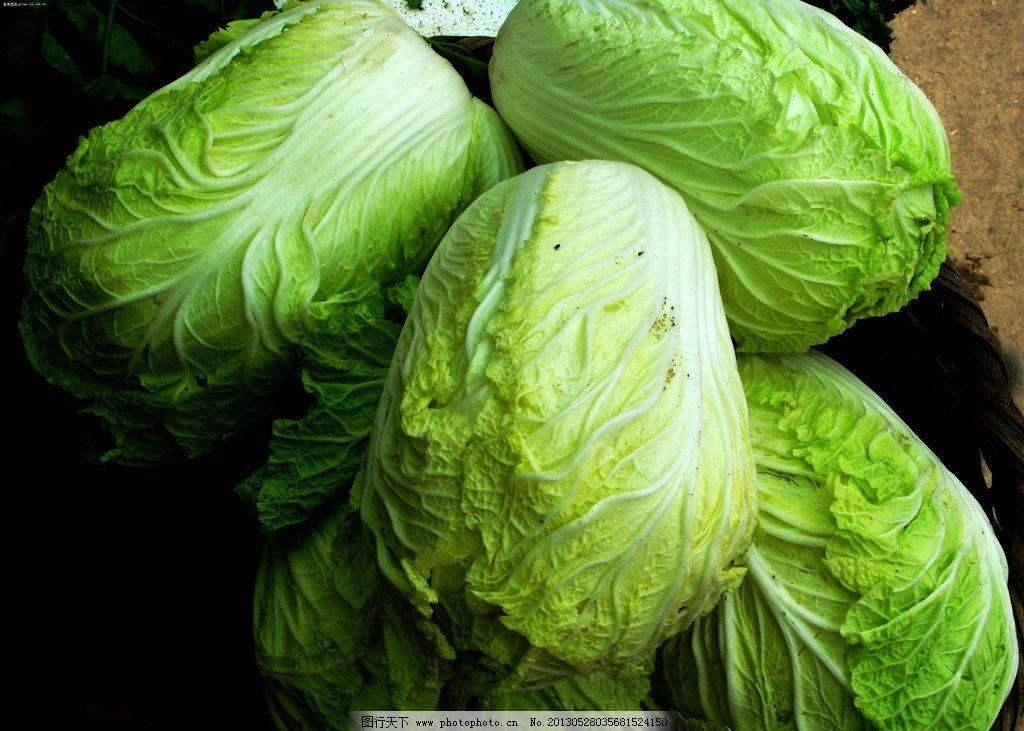 白菜 蔬菜 菜 大白菜 食材 生物世界 摄影 72dpi jpg