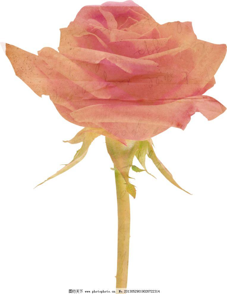 复古粉色玫瑰花图片_绘画书法_文化艺术_图行天下图库