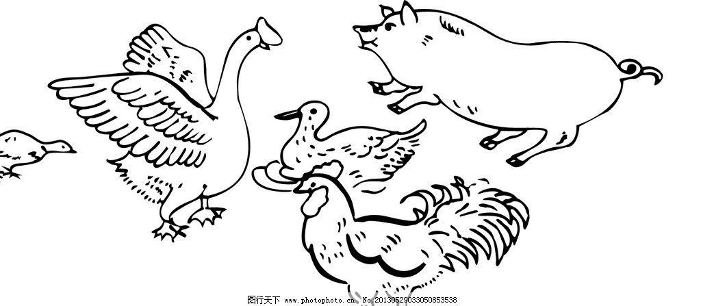 线条鸡鸭 公鸡 鸭子 鹅 猪 线条动物 psd分层素材 源文件 300dpi psd