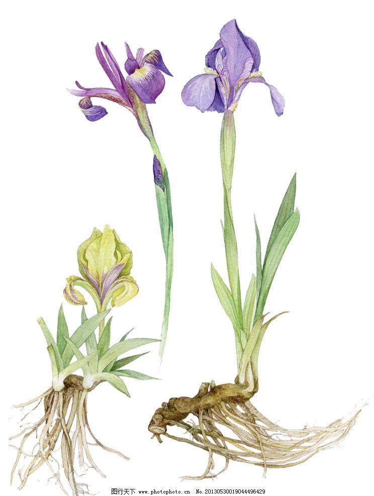 手绘紫色花朵图片