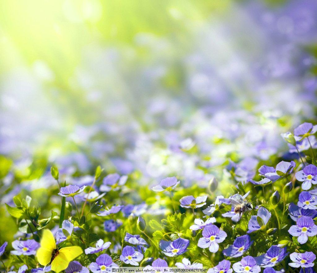 花草背景图片图片