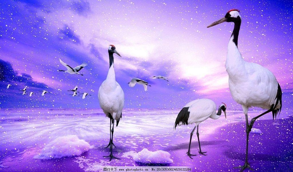 丹顶鹤 雪花 插画 艺术 绘画 高清壁纸 壁纸 鸟类 生物世界 设计 72