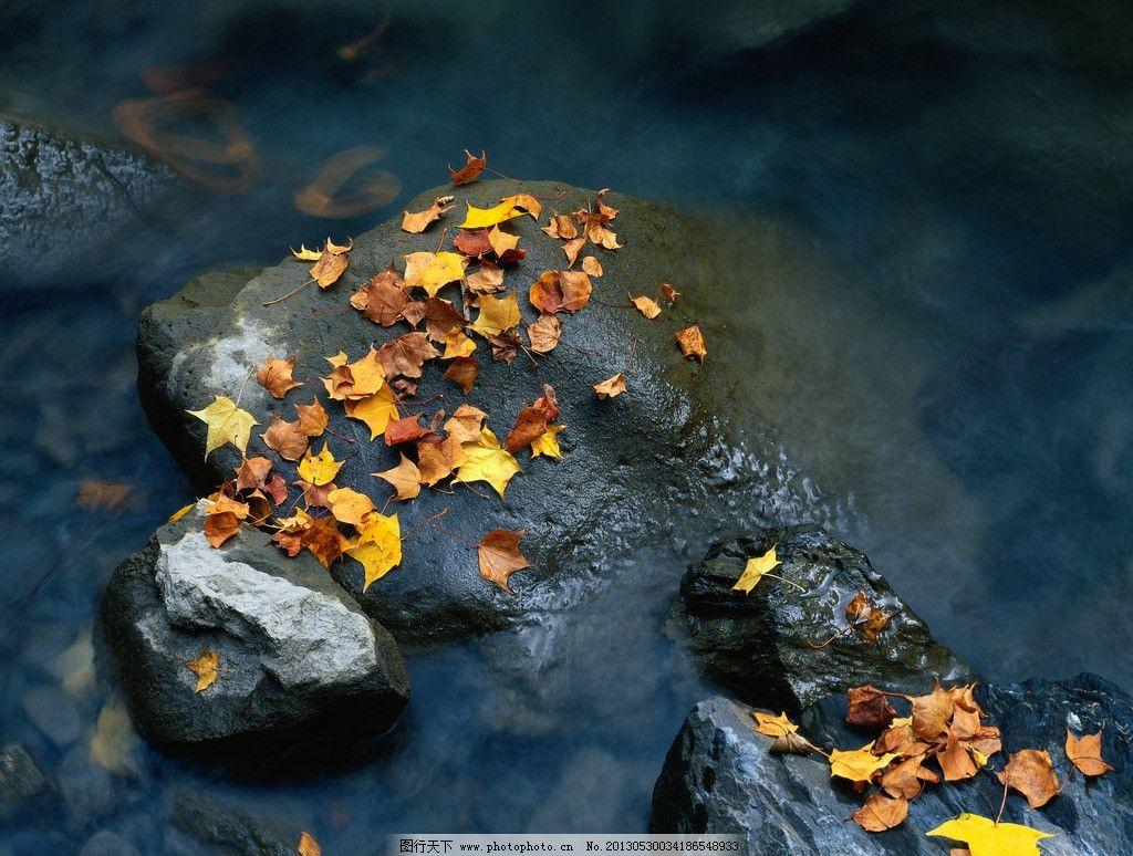 树叶 礁石/礁石上的树叶图片