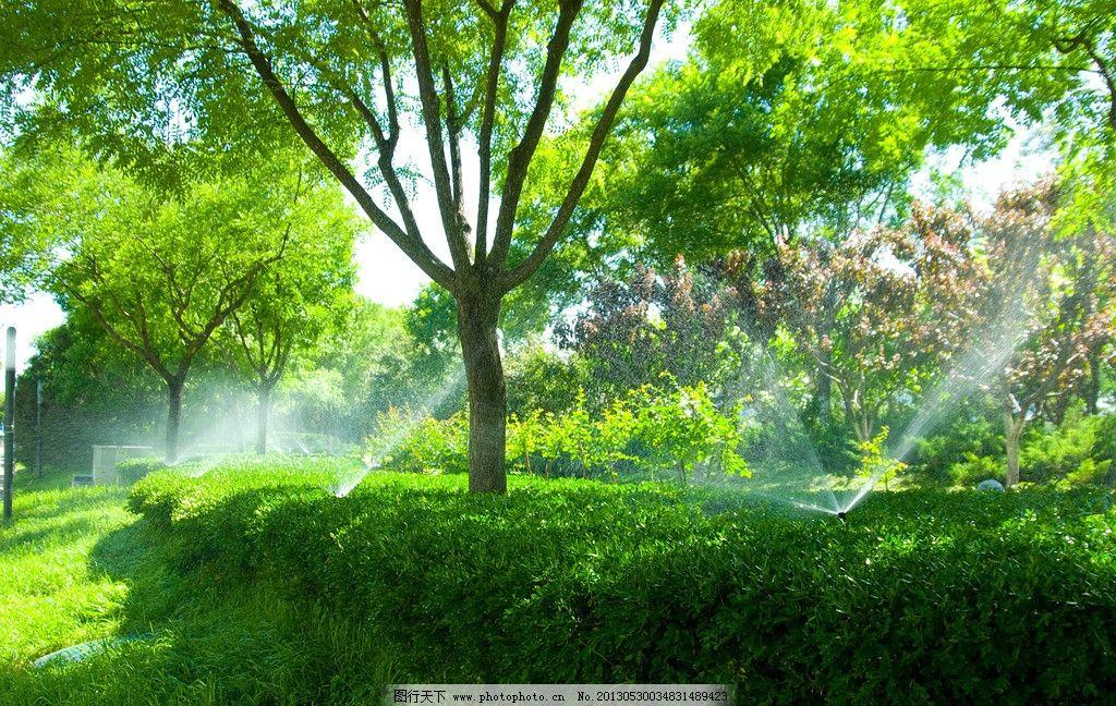 城市绿化 绿化带 喷淋灌溉 灌溉系统 绿植浇灌 草地 绿化树木 自动