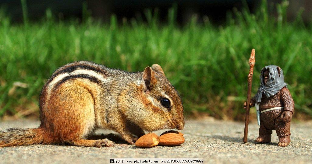 老鼠 小人物 宠物鼠 可爱 宠物 机灵 小动物 野生动物 生物世界 摄影
