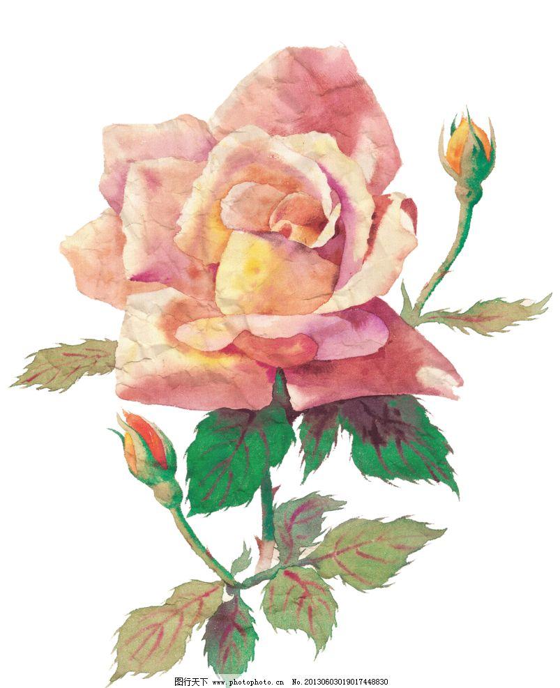 手绘粉色玫瑰红图片